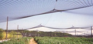 Anti-Insect Net for Agriculture and Garden Greenhouse