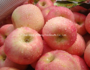 New Crop Fresh Chinese Red Apple