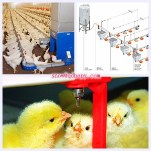 Poultry Farm Equipment for Chicken with Steel Structure Installation