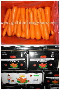2017 New Crop Fresh Carrot (S grade and M grade)
