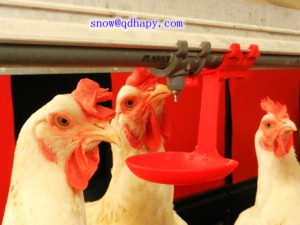 High Quality Poultry Equipment for Broiler Layer and Breeder