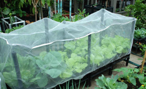 100% HDPE Agricultural Anti Insect Netting