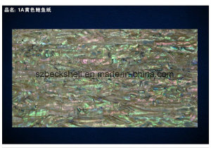 A Grade New Zealand Abalone Shell Sheet in Common Color