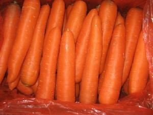 High Quality New Crop Fresh Carrot (150-200g)